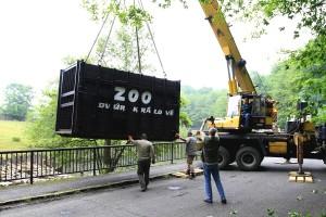 Zoo Dvůr Králové - přesun hrochů do výběhu